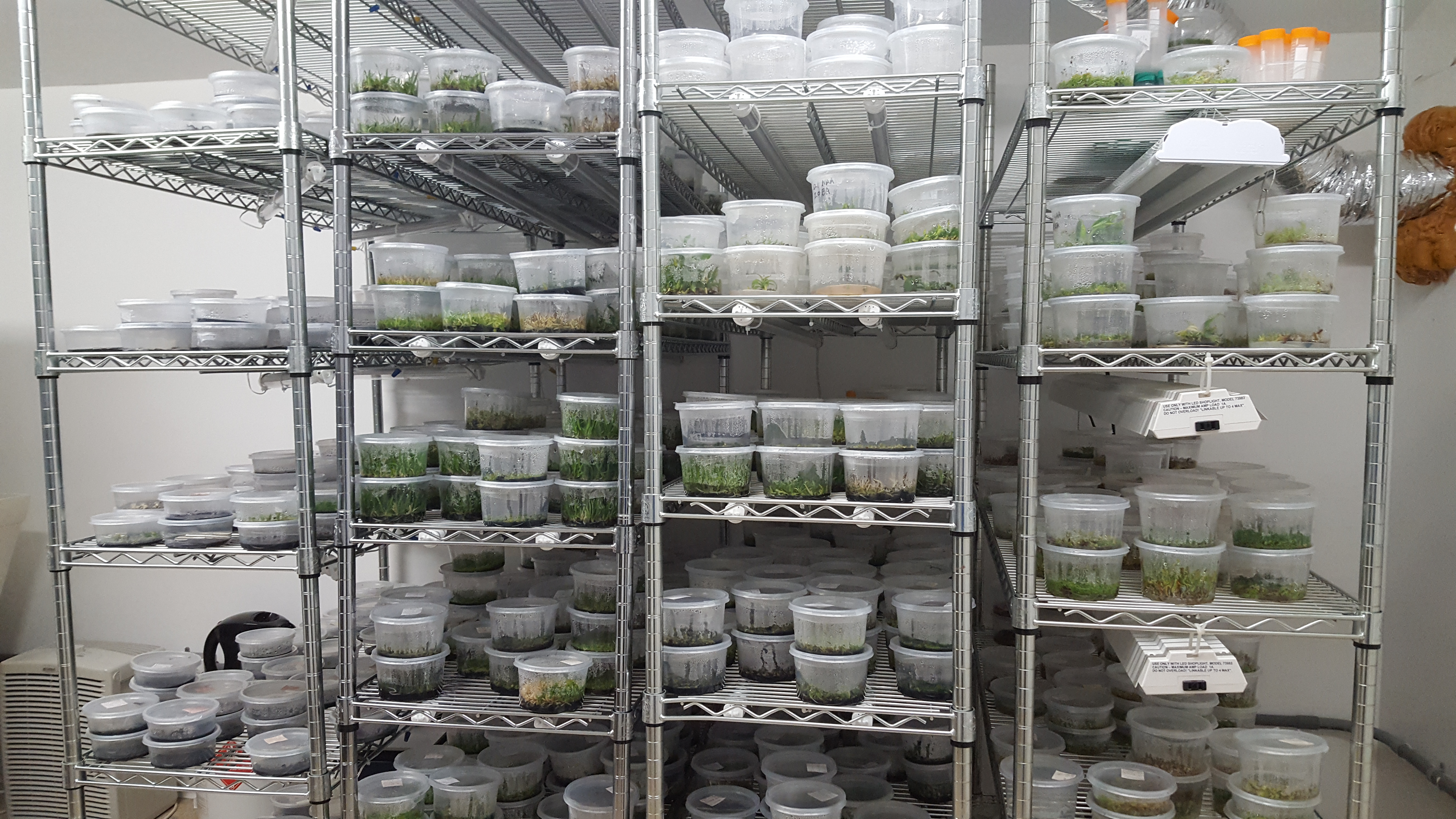 Orchid and carnivorous plant Seed propagation lab