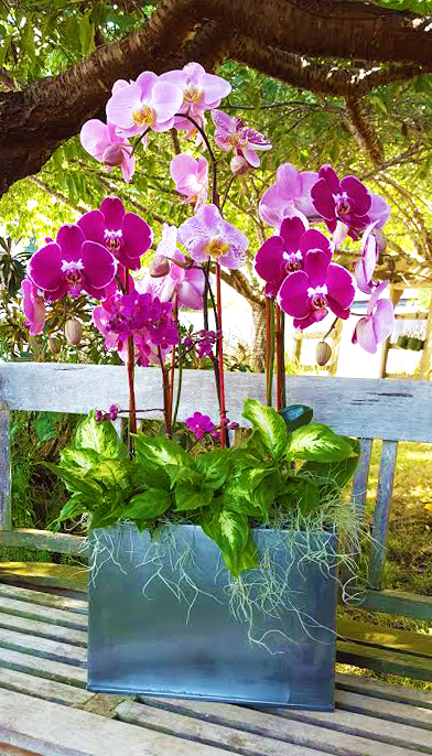 living arrangement event rental Phalaenopsis orchids dieffenbachia and spanish moss