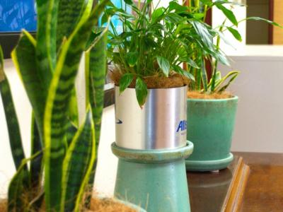 toxin reducing office plants sansevieria and spathiphyllum maintained by Orchids for the People