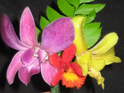 Dendrobium and Epidendrum boutonniere with fern