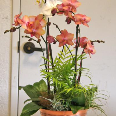 Mother's Day Three Orchid Arrangement Special