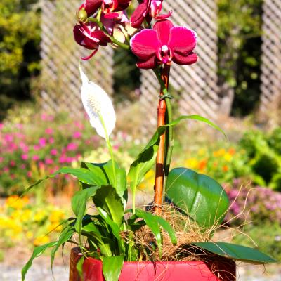 Mother's Day Single Orchid Arrangement Special