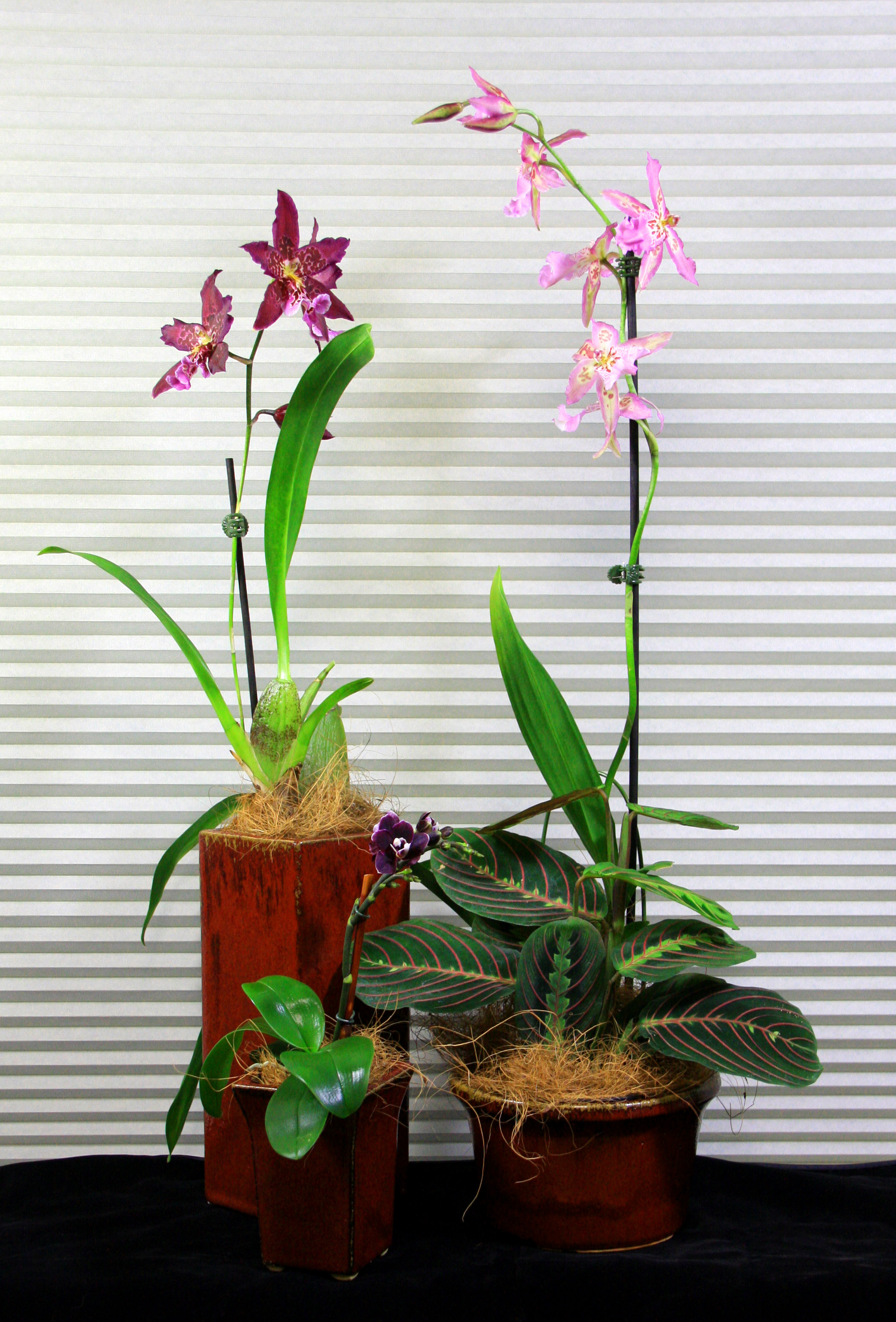 Orchid rental service for your home